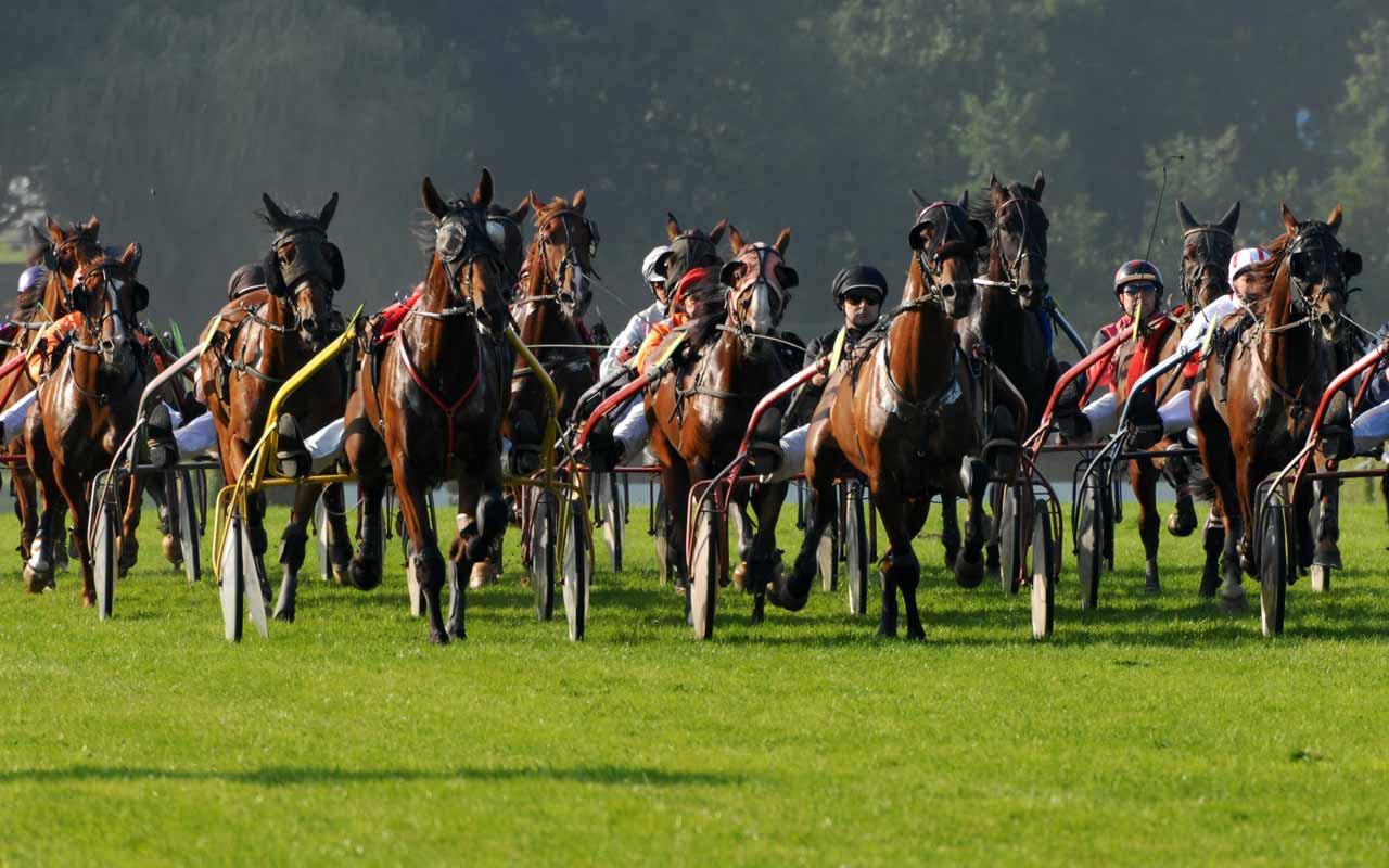 chevaux courses