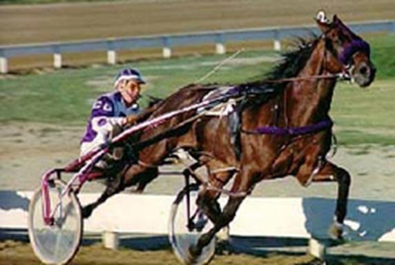 vie cheval course